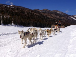 Dog Sledding in Durango